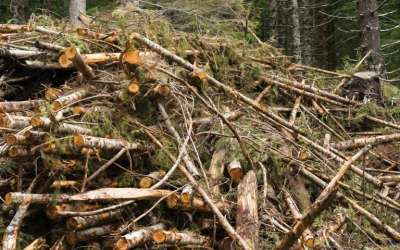 Burning forest biomass is not carbon neutral