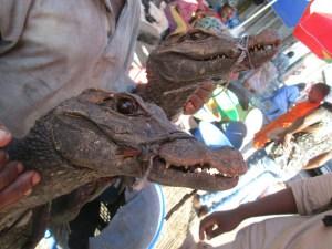 Urban bushmeat/crocodile