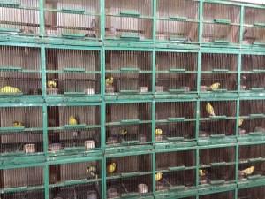 Bird market in Jakarta, Indonesia