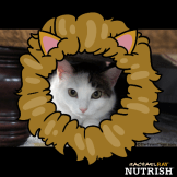 Annie Nutrish Jungle