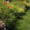 Featured image-Garden