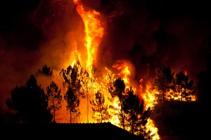 Learn how to protect your home and property from wildfire.