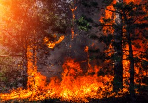 Learn how you can reduce wildfire risk on your property.