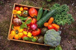 Healthy soil means better yields.