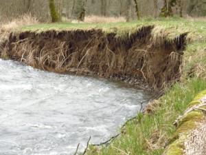 Milk Creek: Eroding streambank