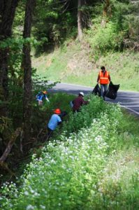 The Clackamas SWCD WeedWise crew removing garlic mustard.