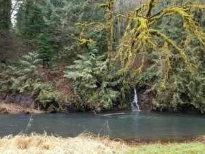 The Guttridge forest includes a stream at the bottom of a canyon.