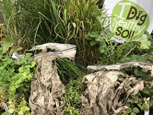 Don't take good soil health for granted. Make a plan!