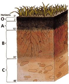 O = organic, A = surface soil, B = subsoil, C = parent rock