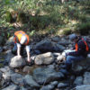Macroinvertebrate sampling to assess stream health