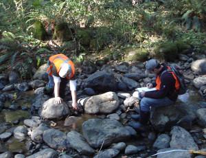 Macroinvertebrate sampling to assess stream health