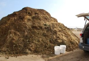 Share composted manure with local farmers or gardeners.