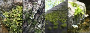 Moss growing everywhere. Photo by Cathy Burk