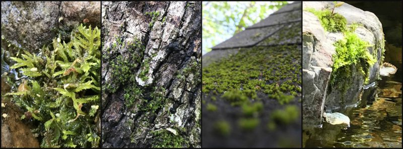 The Benefits And Ecology Of A Moss Lawn Clackamas Swcd