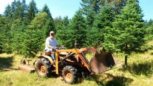Christmas tree management at Trillium Tree Farm
