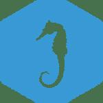 07-seahorse