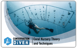 Coral Nursery
