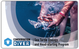 Sea Turtle Certification