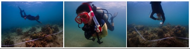 The team Carries out Reef surveys at Toboso