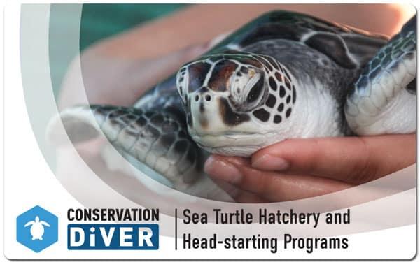 sea turtle restoration