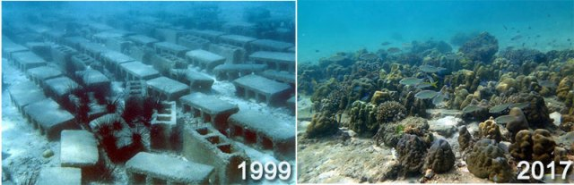 cinder block reefs