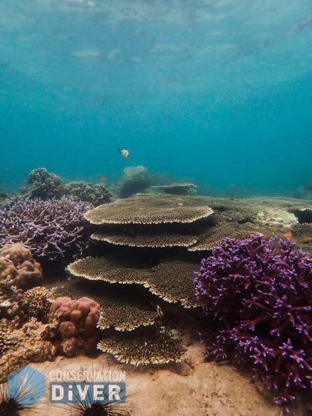 reefs of the Escalante Region