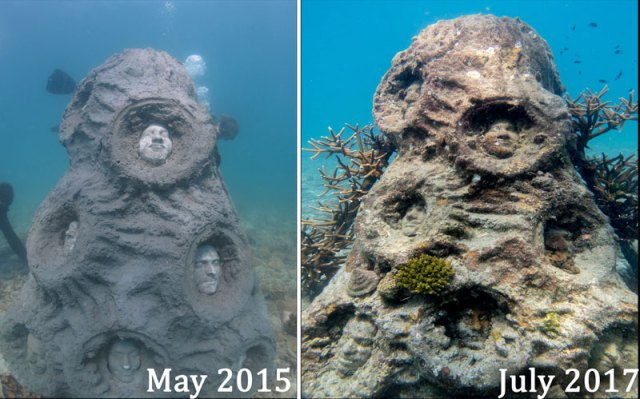 The Colony Artificial reef