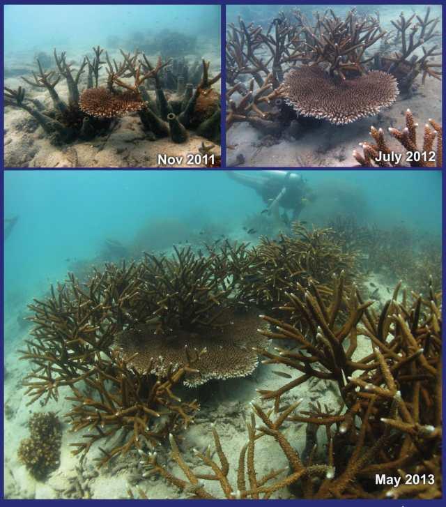 Bottle unit coral restoration