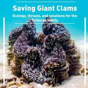 giant clam restoration