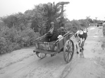 Heading home in a Zebu cart