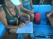 LMC S.W.I.M. participant, Kelly, records all data collected from the captured sea turtle.