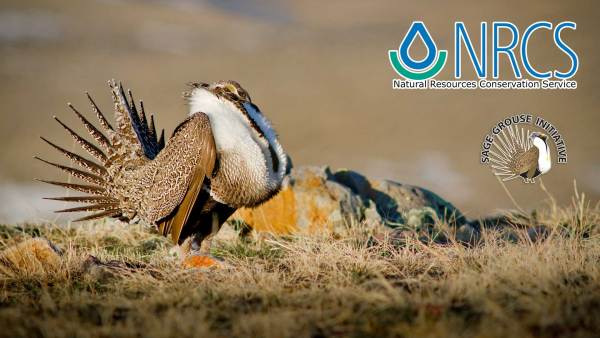 USDA Sage Grouse Initiative