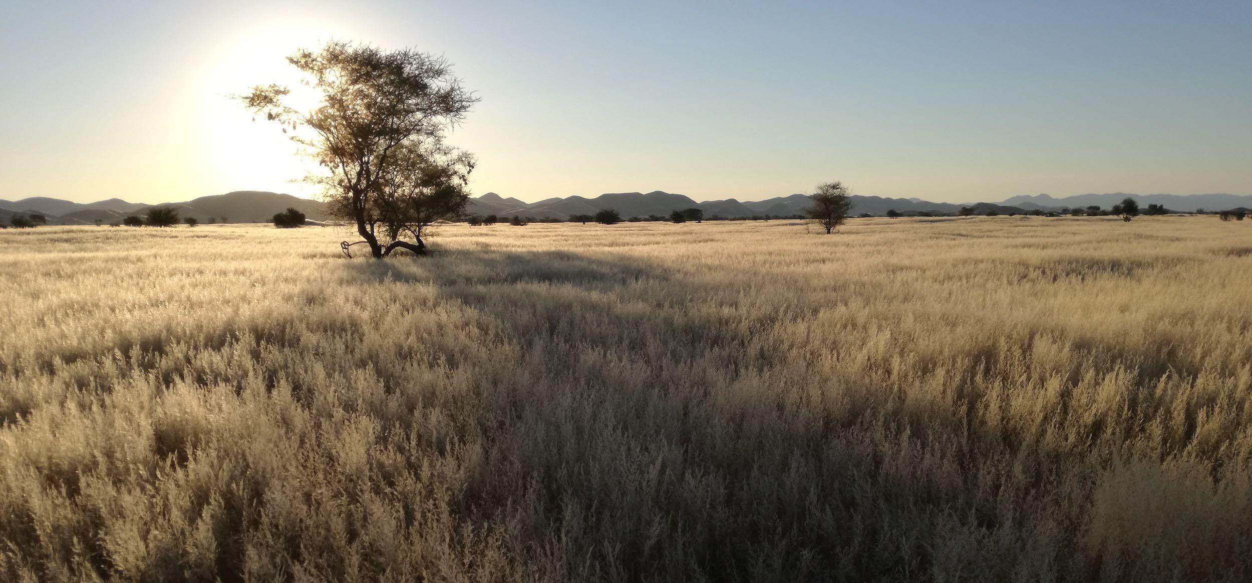 Namibian grasslands.