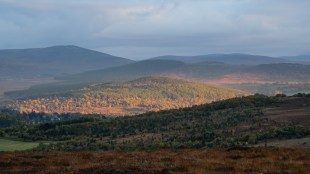 There is a patchwork of mixed forest types across the highlands.