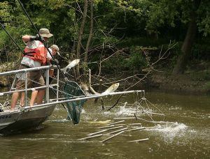 785px-Electrofishing_for_the_asian_carp_invasive_species