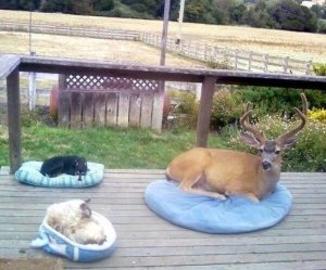 dog-cat-and-deer-on-the-porch