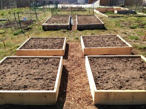 conshohocken-community-garden-boxes