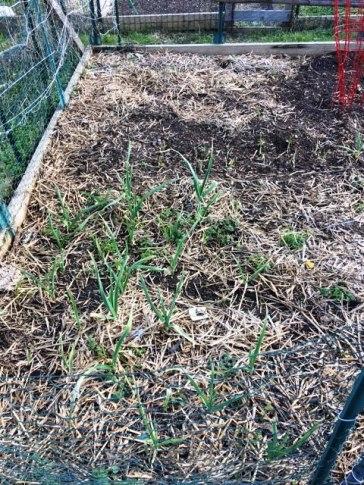 Conshohocken Community Garden Planted 3