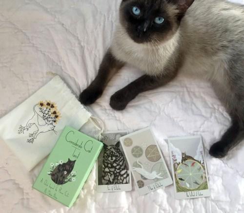 Considerate Cat Tarot – A whimsical cat themed tarot deck inspired