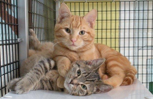 gatos abrigos
