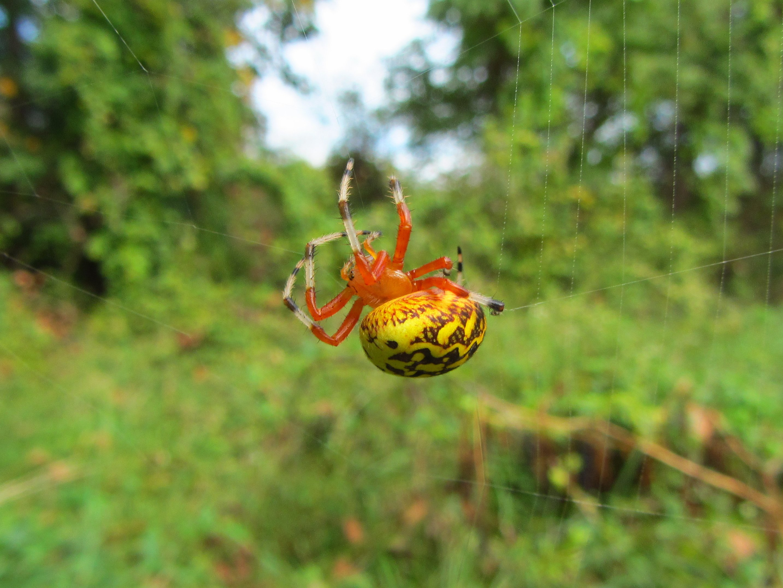 spider season considering birds