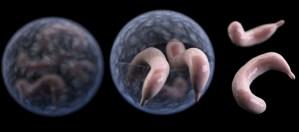 Cyclospora Parasite Outbreak Consider The Consumer
