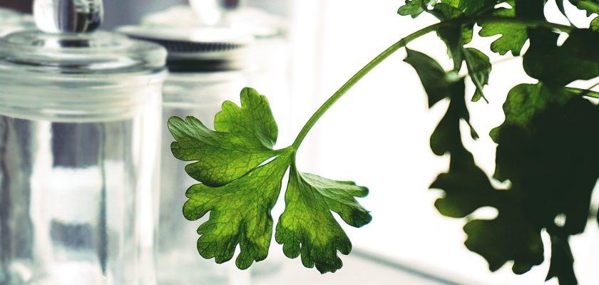 Buurma Farms Parsley Recall - Risks Of E. Coli From Shiga-toxin
