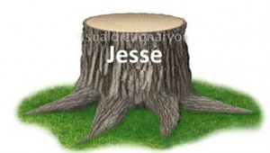 Isaiah predicted the dynasty of david as a stump