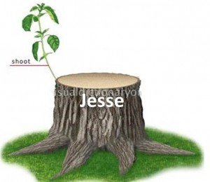 isaiah predicted that a one would come from the stump as a branch
