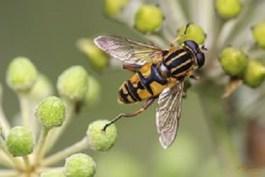 Sognare api significato psicologico e divinatorio