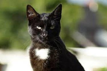 Sognare Gatto Nero Con Macchie Bianche Sogno Di Martina Consigli Per Tutti