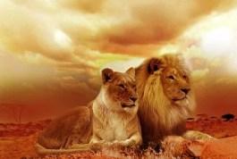 Sognare di vedere il proprio figlio aggredito da dei leoni: sogno Cristina