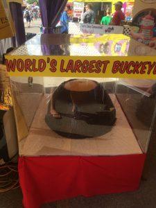World's Largest Buckeye