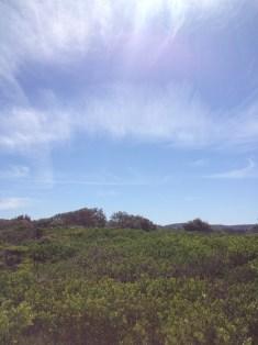chem-spraying-sydney-nth-beaches-061116b